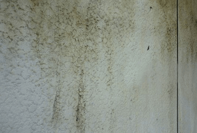 コケ・カビ・藻の発生