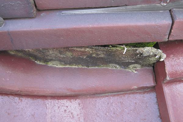 屋根のコケ・植物
